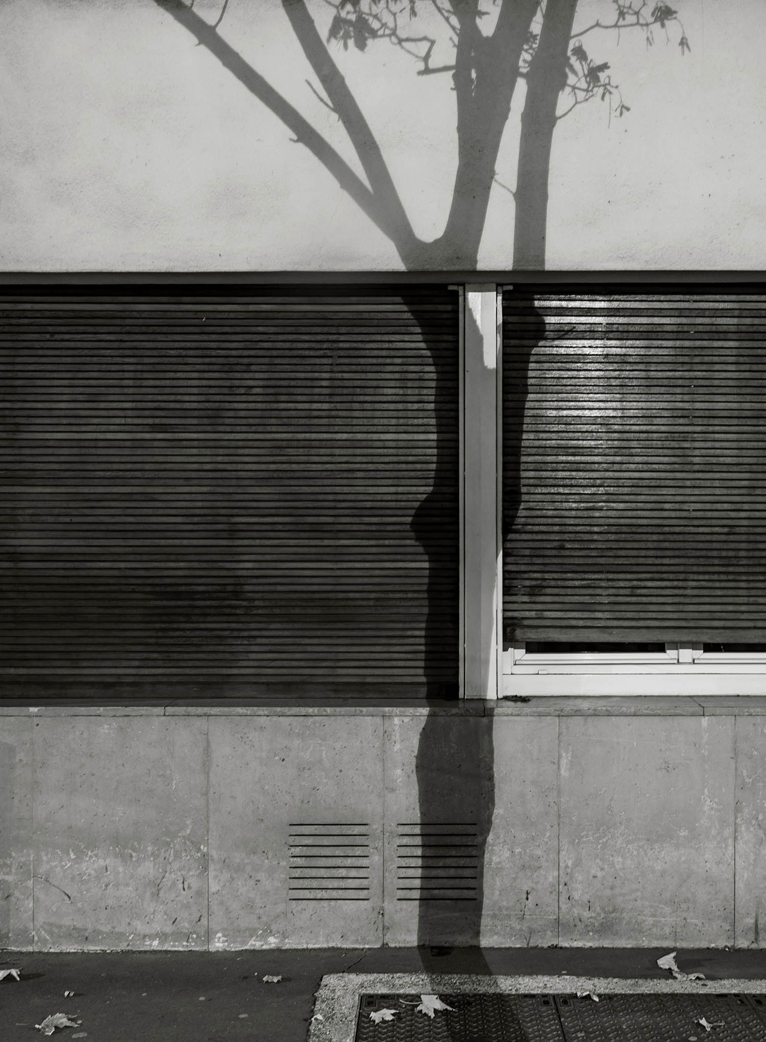 Michael Wolf Paris Tree Shadows Pts_6