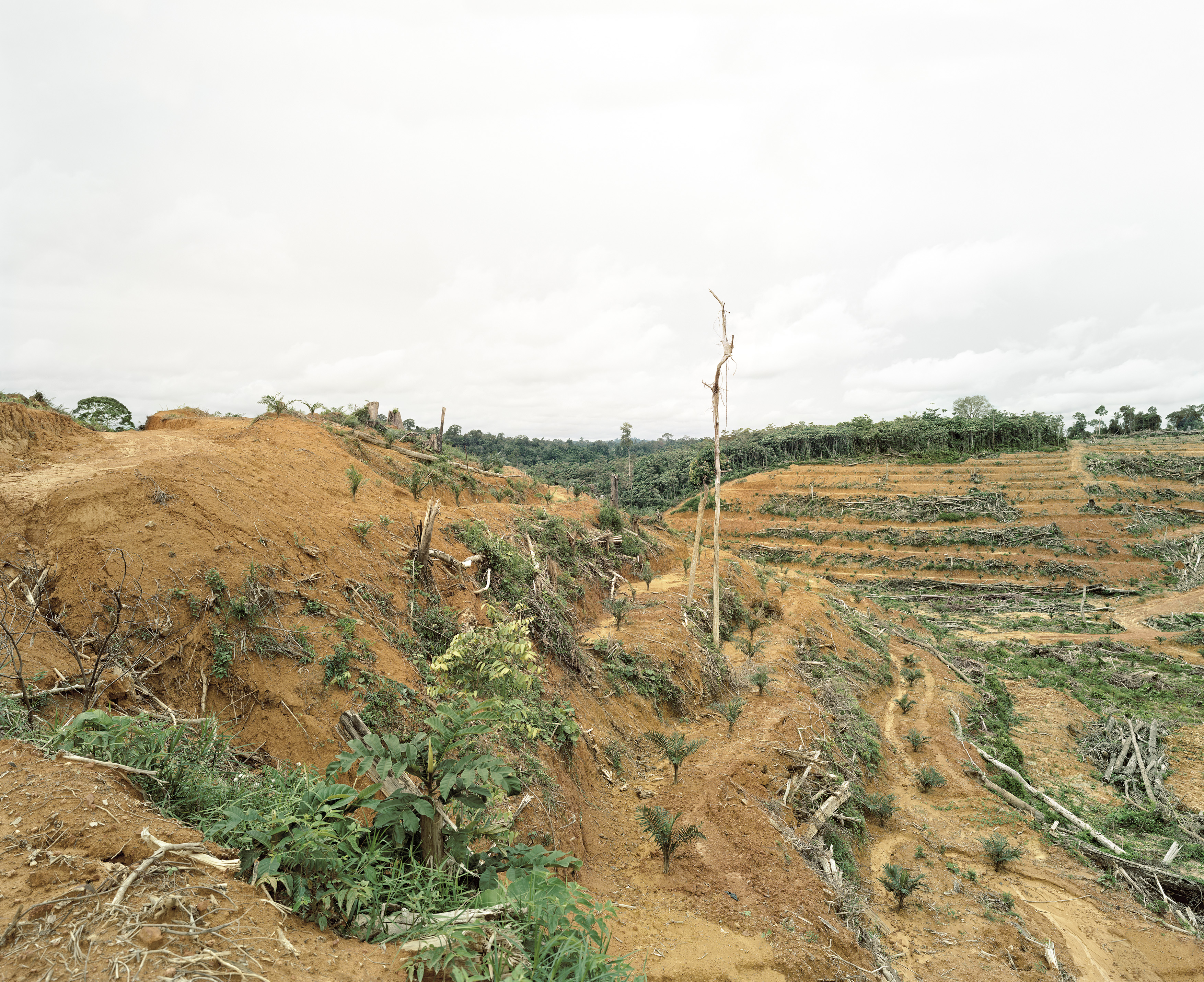 Illegal Deforestation Of Primary Forest, Tumban Karan, Central Kalimantan, Indonesia, 03/2012S 1° 22' 58'', E 112° 41' 01