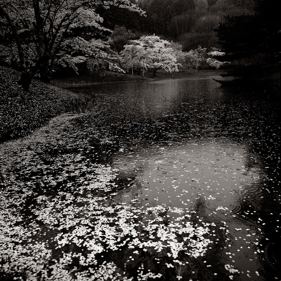 2014Rainy Day By Handanuma Swamp No.1,Fukushima
